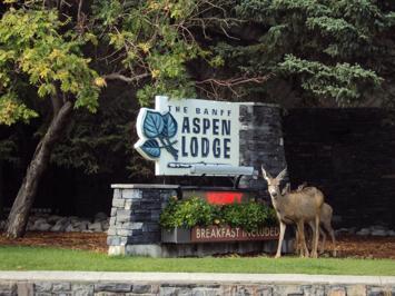 Foto Banff Aspen Lodge *** Banff