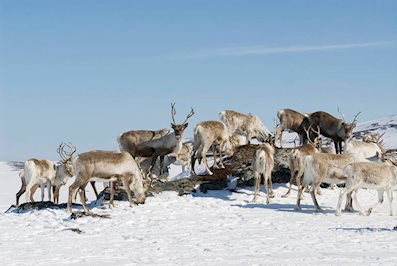 Foto Scandic Grand Tromso **** Tromso