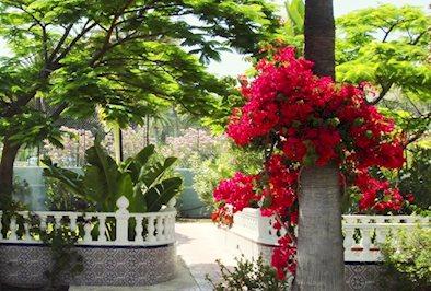 Foto San Valentin en Terraflor Park *** Playa del Ingles