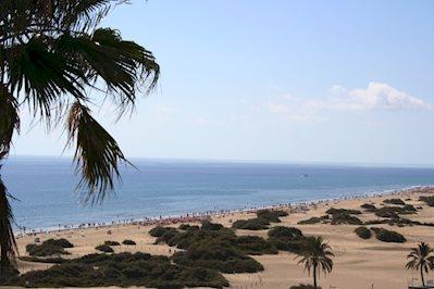 Foto Tabaibas **** Playa del Ingles