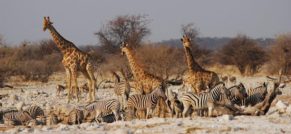 Dieren bij een waterplas in Etosha NP Namibie