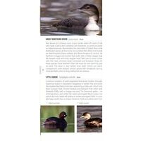 Bloomsbury Vogelgids Spanje - Birds Of Spain