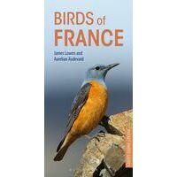 Bloomsbury Vogelgids Frankrijk - Birds Of France