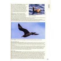 John Beaufoy Australia's Birding Megaspotts