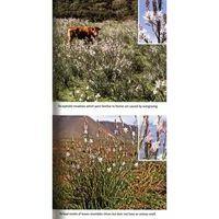 John Beaufoy Wild Flowers Of The Mediterranean