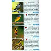 Struik Nature Birds Of Southern Africa - Vogelgids Zuidelijk Afrika