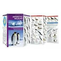 Waterford Antarctic Wildlife
