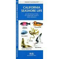 Waterford California Seashore Life