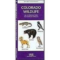 Waterford Colorado Wildlife